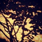 sombras Fotografia de Stock