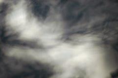Sombras abstratas da árvore na parede Imagem de Stock Royalty Free