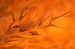Sombras anaranjadas en fondo anaranjado Foto de archivo