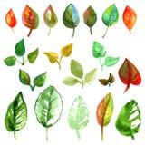 Sombras coloridas de las variaciones de los dibujos de la pintura de los árboles de las hojas de otoño del verano de la acuarela  Fotos de archivo libres de regalías