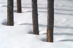 Sombras da árvore Fotografia de Stock Royalty Free