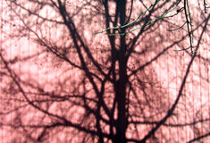 Sombras da árvore Fotografia de Stock