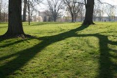 Sombras da árvore da manhã Fotos de Stock Royalty Free