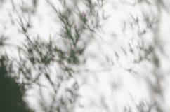 Sombras da árvore de bambu fotografia de stock