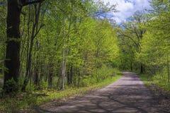 Sombras da árvore, estrada secundária, mola imagens de stock royalty free