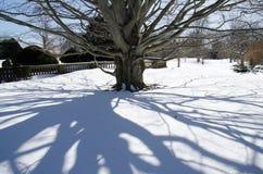 Sombras da árvore fora da mansão dos disjuntores - Newport, Connecticut, EUA imagens de stock royalty free
