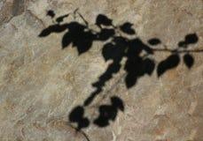 Sombras da folha Imagem de Stock Royalty Free