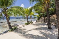 Sombras da palma na praia de Roatan imagens de stock royalty free