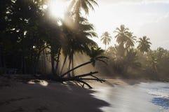 Sombras da palmeira Fotografia de Stock Royalty Free