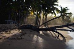 Sombras da palmeira Imagens de Stock