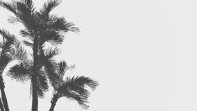 Sombras da palmeira na metragem da areia Silhuetas das palmas de coco na praia do oceano Folhas que balançam no vento, brisa de m video estoque