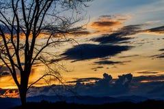 Sombras das árvores e do céu no fundo do por do sol Fotografia de Stock Royalty Free