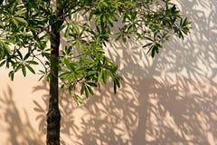 Sombras das árvores que caem na cerca Fotografia de Stock