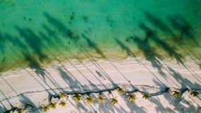 Sombras das palmeiras fotos de stock