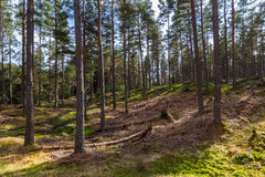 Sombras de árboles en bosque Imagen de archivo