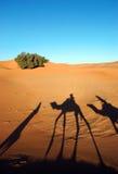 Sombras de la caravana del camello Imagen de archivo libre de regalías