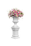Sombras de la flor del rosa Imagen de archivo libre de regalías