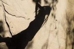 Sombras de la gente Fotos de archivo libres de regalías