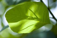 Sombras de la hoja Imagen de archivo libre de regalías