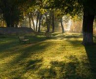 Sombras de la mañana sobre hierba verde en un parque Imagen de archivo