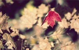 Sombras de la naturaleza Imagenes de archivo