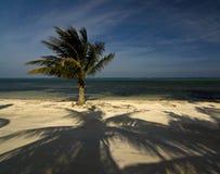 Sombras de la palma fotografía de archivo libre de regalías
