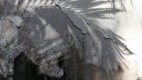Sombras de la palmera de Manila en el muro de cemento viejo almacen de video