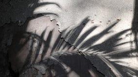 Sombras de la palmera de Manila en el muro de cemento viejo almacen de metraje de vídeo