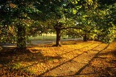 Sombras de la tarde Foto de archivo