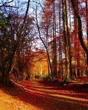 Sombras de la tarde Imagen de archivo libre de regalías