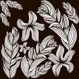 Sombras de las flores Imagenes de archivo