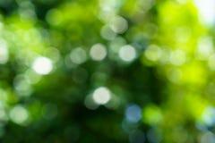 Sombras de las hojas naturales defocused del verde y de la luz blanca que brilla intensamente Fotografía de archivo libre de regalías