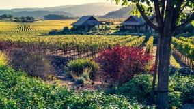 Sombras de los viñedos de California del otoño imágenes de archivo libres de regalías