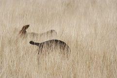 Sombras de perros Fotografía de archivo