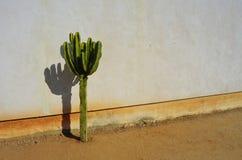 Sombras de punta Imagen de archivo libre de regalías