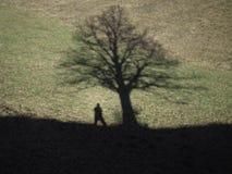 Sombras de um homem e de uma árvore Imagens de Stock