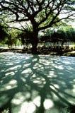 Sombras de uma árvore fotografia de stock royalty free