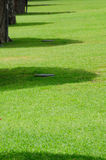 Sombras debajo de los árboles Foto de archivo libre de regalías