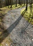 Sombras del árbol Imágenes de archivo libres de regalías