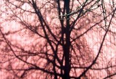 Sombras del árbol fotografía de archivo