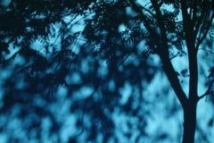 Sombras del árbol en la pared Fotos de archivo