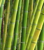 Sombras del bambú Fotografía de archivo libre de regalías