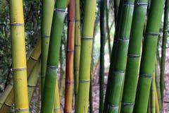 Sombras del bambú Imágenes de archivo libres de regalías