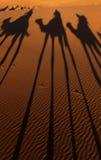 Sombras del camello Imagen de archivo