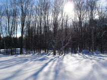 Sombras del invierno Fotos de archivo