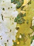 Sombras del marrón, de la madera, del modelo y de la naturaleza imagen de archivo