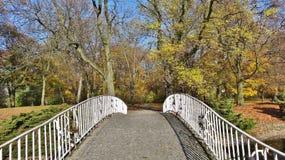 Sombras del otoño en el parque Imagen de archivo
