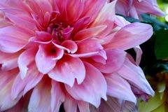 Sombras del rosa Fotografía de archivo libre de regalías