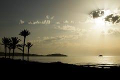 Sombras del treesde la palma en la playa Fotografía de archivo libre de regalías
