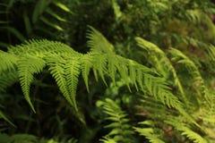 Sombras diversas y de los intenses del verde Imagen de archivo